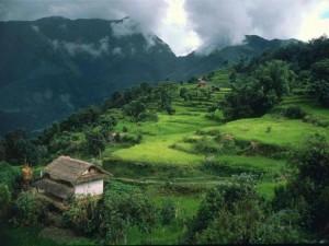 Puisi tentang alam : Kampungku
