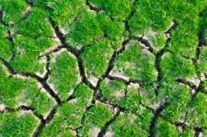 Daerah resapan air harus tetap dijaga keberadaannya